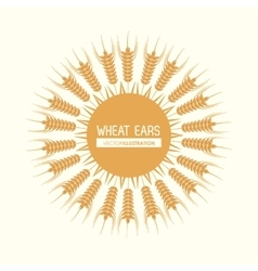 Wheat ears design farm and agriculture concept vector