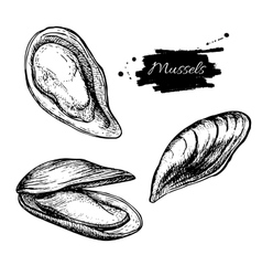 Vintage mussel set drawing hand drawn vector