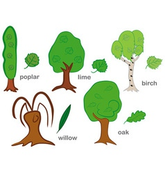 Deciduous Trees vector image