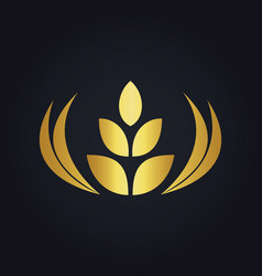 wheat abstract food tree gold logo vector image