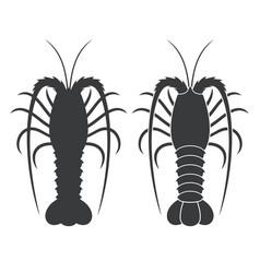 Spiny lobster vector