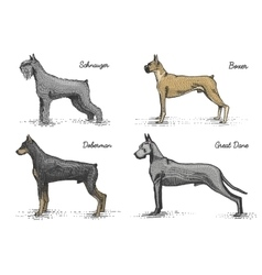 Dog breeds engraved hand drawn vector
