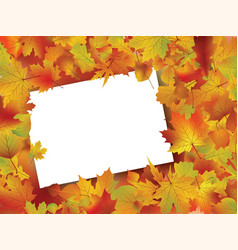 thanksgiving fall autumn background vector image