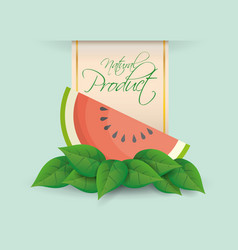 watermelon natural product label design vector image
