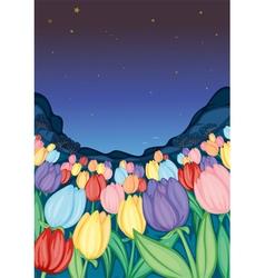 tulip farm vector image