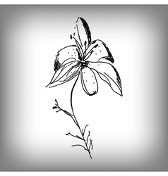 Lily flower by hand vector