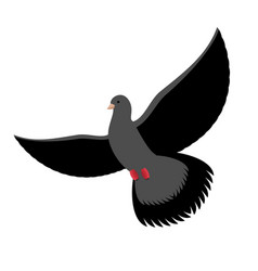 Black dove isolated dark pigeon on white vector