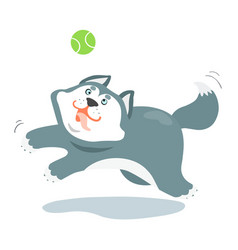 funny siberian husky dog and a ball vector image vector image