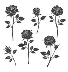 Rose buds silhouettes flowers design vector