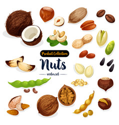 nuts seed bean cartoon icon set for food design vector image