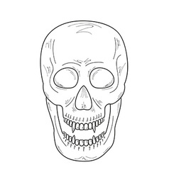 skull with vampire teeth sketch vector image