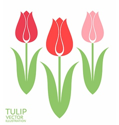 Tulip Set vector image vector image