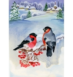 Bullfinch birds on snowy tree branch watercolor vector