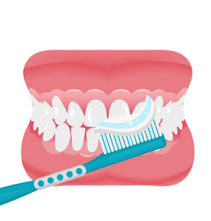 Jaw with teeth and toothbrush icon flat style vector