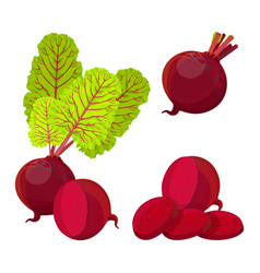 Purple beetroot whole half and slices isolated on vector