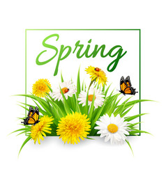 Nature spring background with grass flowers and vector