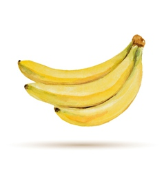 Banana hand drawn watercolor on a white background vector