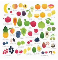 Food vol 3 fruits and berries vector