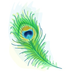 feather of a peacock vector image