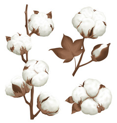 Cotton plant boll realistic set vector