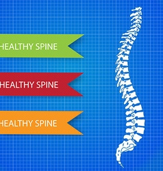 Spinal diagram vector