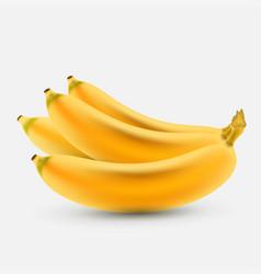 Banana fruit vector