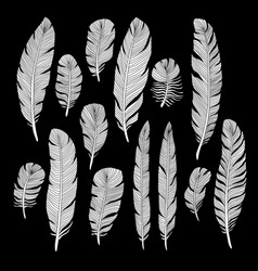 Sketch hand drawn birds feathers set vector