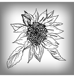 Sunflower by hand monochrome vector