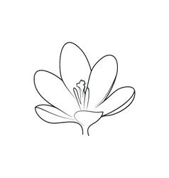 crocus beautiful flower simple black lined icon on vector image
