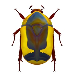 African flower chafer vector