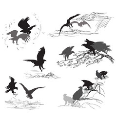 Set of scenes of eagle life vector