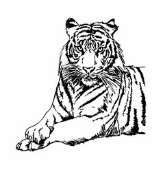 Tigers clipart and stock vector