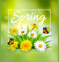 nature spring background with colorful flowers vector image