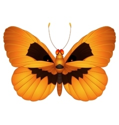 Halloween butterfly vector
