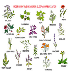 Best herbal remedies for sleep and relaxation vector