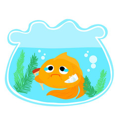 Goldfish injury in the bowl vector