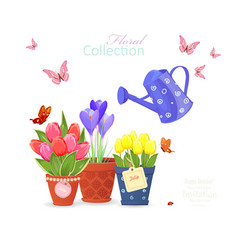 Spring flowers planted in ethnic flowerpots and a vector