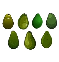 Dark green isolated avocado fruits vector