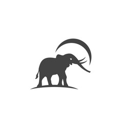 Elephant logo template icon vector