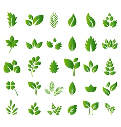 Set of green leaves design elements for you design vector image vector image