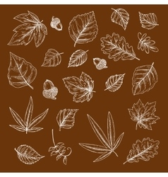 Autumnal fallen leaves and acorns chalk sketches vector