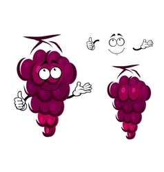 Bunch of fresh ripe purple grapes vector
