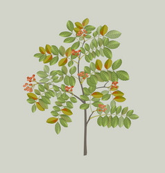 pepper tree branch vector image vector image