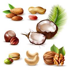 nuts realistic set vector image