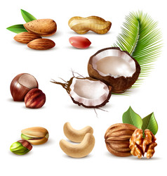 nuts realistic set vector image