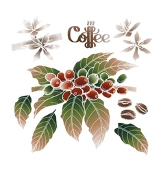 Graphic coffee collection vector