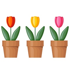 Pot tulips vector