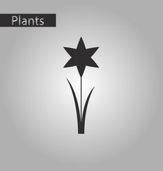 Black and white style icon of flower narcissus vector