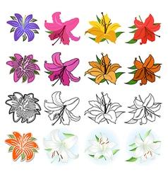 Lilies set vector image vector image