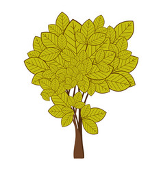 Green leafy tree with ramifications nature icon vector